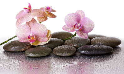 Spa stones and orchid flowers and black stones