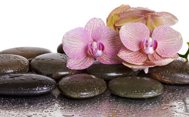 Orchid flowers and black stones