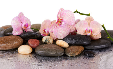 orchids and wet black stones with reflection