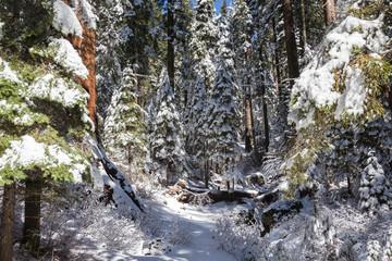 Giants Sequoias III