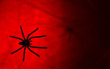 Cobweb with spider on colorful background