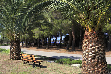 Palm trees and bench