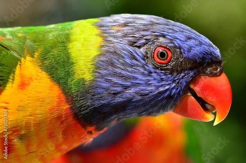 Tuinposter Papegaai Rainbow Lorikeet