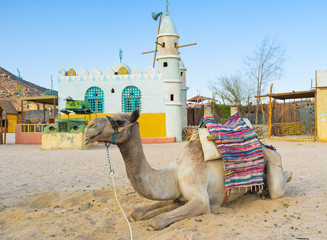 The camel in village