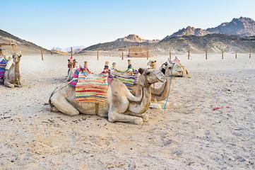 The evening in desert