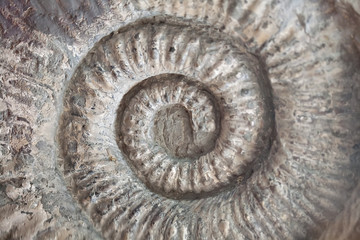 fossil shell pattern spiral texture