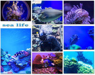 species of life underwater world