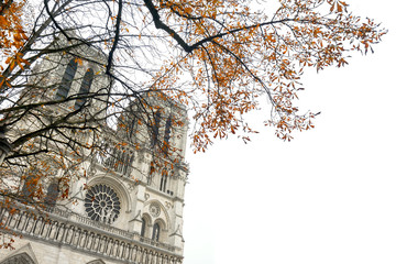 Notre Dame Cathedral, Paris, France with autumn tree
