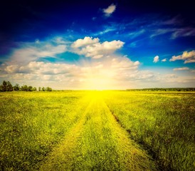 Spring summer rural road in green field landscape