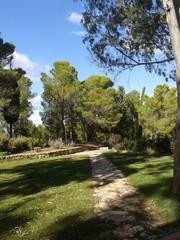 Una strada nel bosco