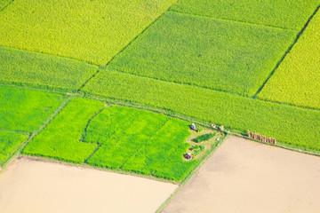 rice field in Bac Son, Vietnam