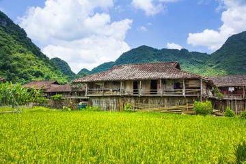 rice filed around home