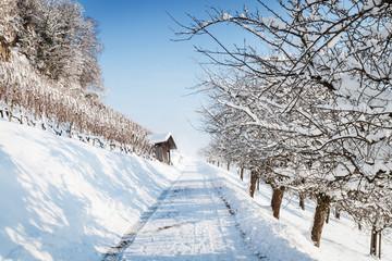 footpath in winter season near by vineyards