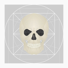 Golden ratio of the skull.