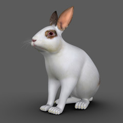 European rabbit (Cuniculus)