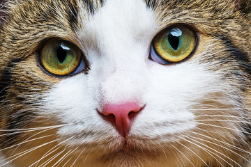 a cat portrait close up