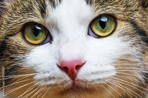 Staande foto Kat a cat portrait close up