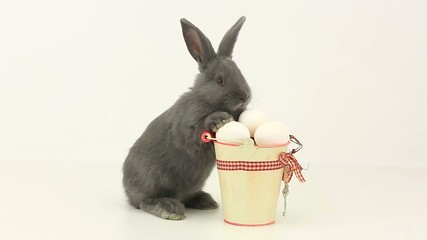 Fluffy  rabbit with Easter eggs isolated on white