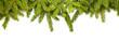 Fir branches - 73048230