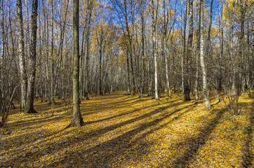 Autumn forest in October.