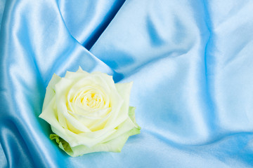 blossom white rose bud lying on a blue cloth