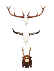Animal skulls with antlers and horns.