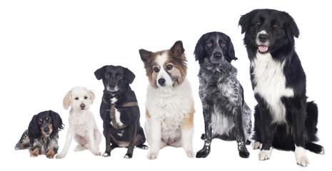 Sechs Mischlingshunde in einer Reihe - Hundegruppe