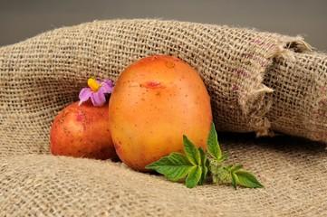 New Potatoes on Sackcloth