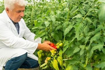Plant Technologist