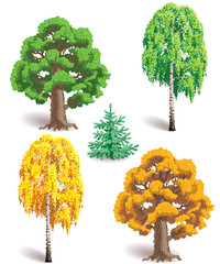 Trees in summer and autumn