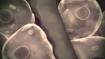 human cells, artery