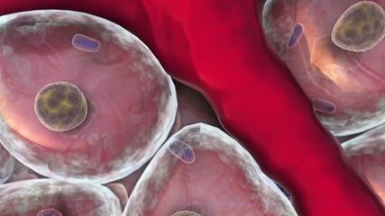 cells, Vein