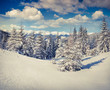 Beautiful winter landscape in the Carpathian mountains.