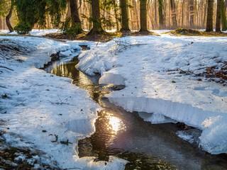 Wildbach im Wald in Bayern