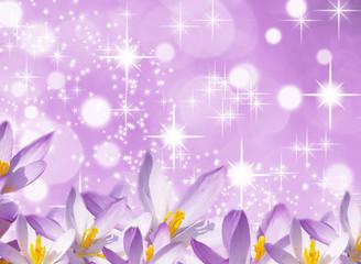 Feuerwerk des Frühlings