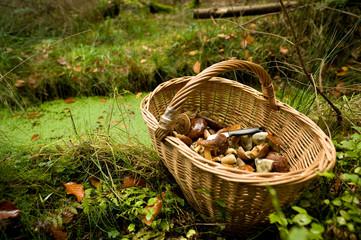 Korb mit Pilzen im Wald