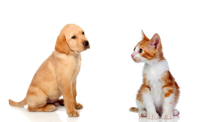 Nice puppy and kitten together