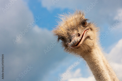 Ostrich head closeup outdoors - 73070034