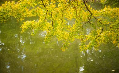 黄色く染まった木