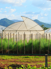 green house for arganic vegetable plant in clean agriculture ind