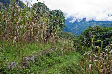 Rain forest in Sikkim