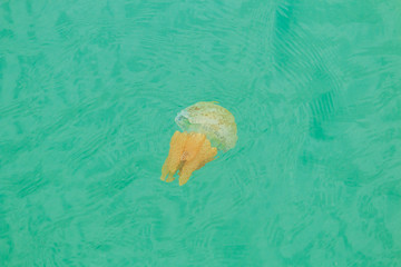 Sea jellyfish floating in the sea of Thailand
