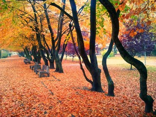 Autumn and park path