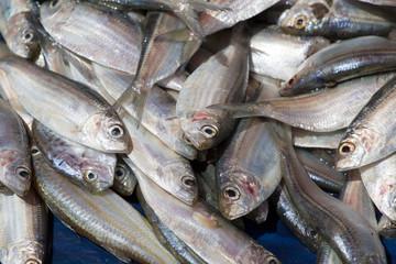 Fish on the market in Sri Lanka