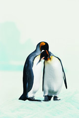 Объятия пингвинов