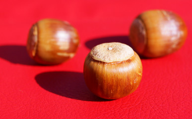 Simple macro image of an acorn isolated on red in japan
