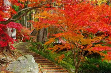 紅葉と石段