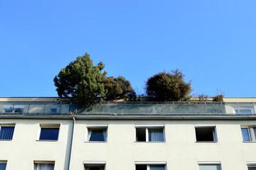 Dachterrasse mit Baum