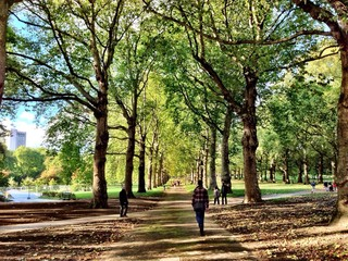 Suggestive view of the Green Park in London