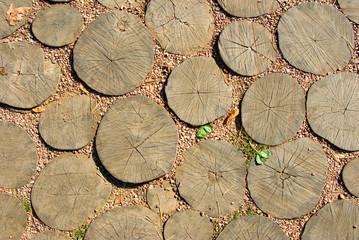wooden stumps closeup